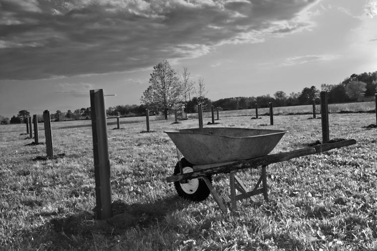 wheelbarrow in a field, April 17, 2010