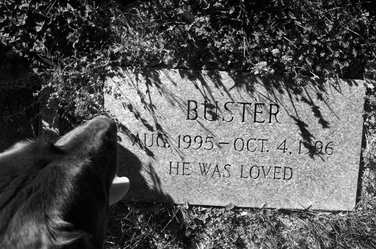 gravestone for Buster, no last name