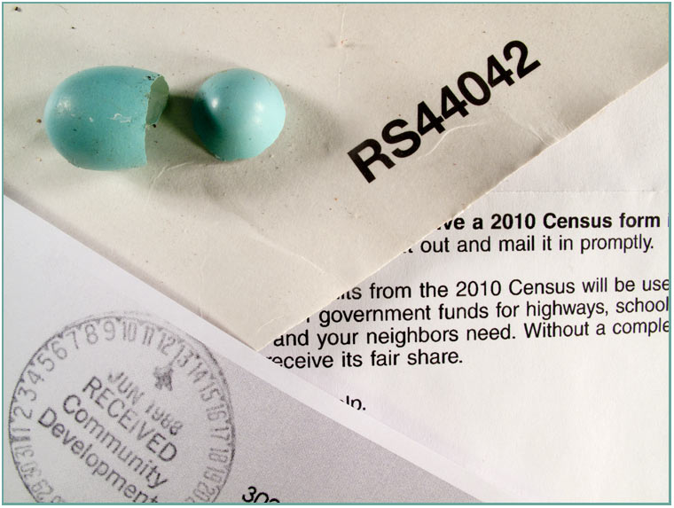 a robin's egg and some old govt correspondence