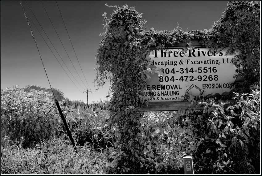 sign and vines