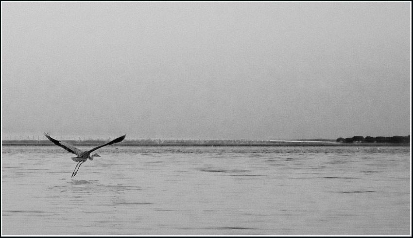 heron, Rappahannock River