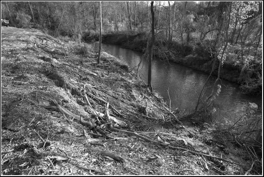 left bank of Moore's Creek