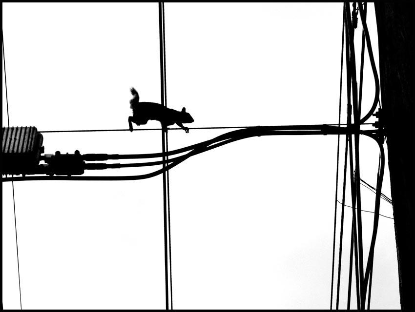 air rat