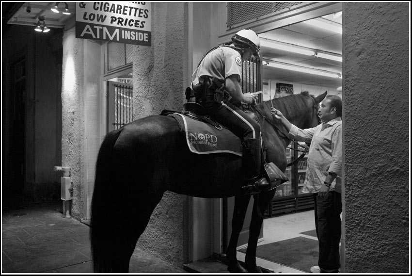 horse visits bodega