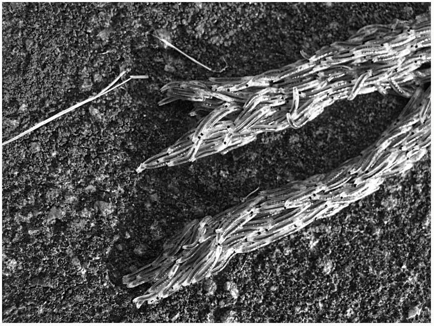 worm detail
