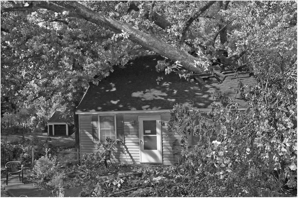 tree v house