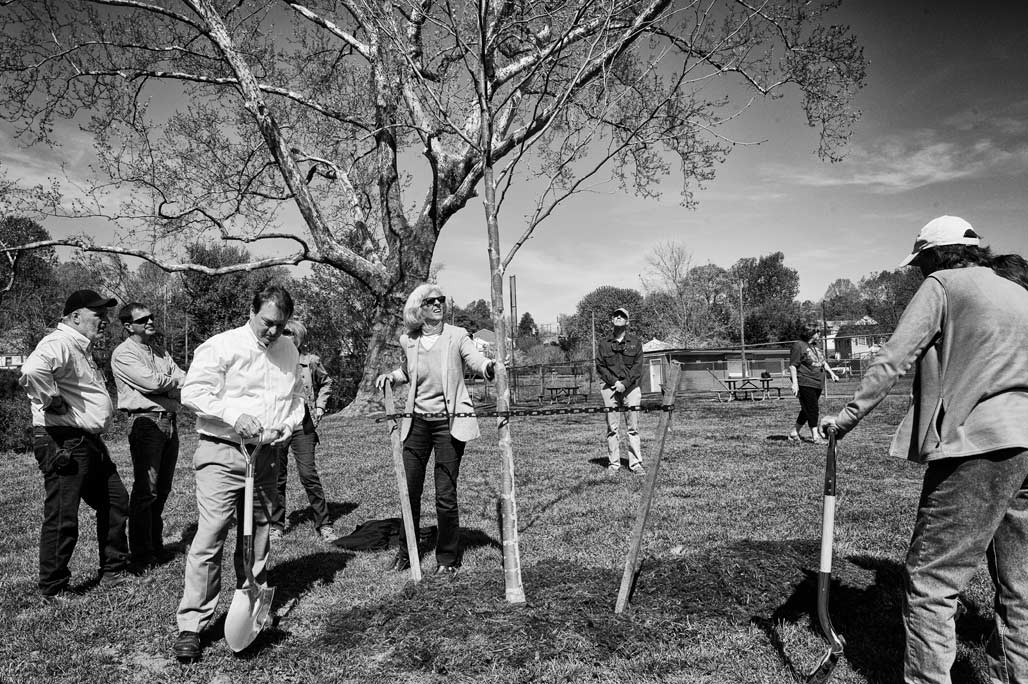 planting big tree