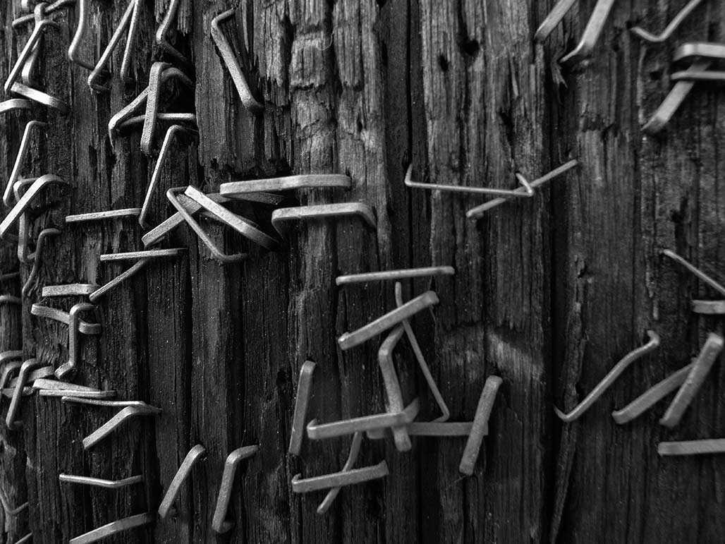 staples in a utility pole