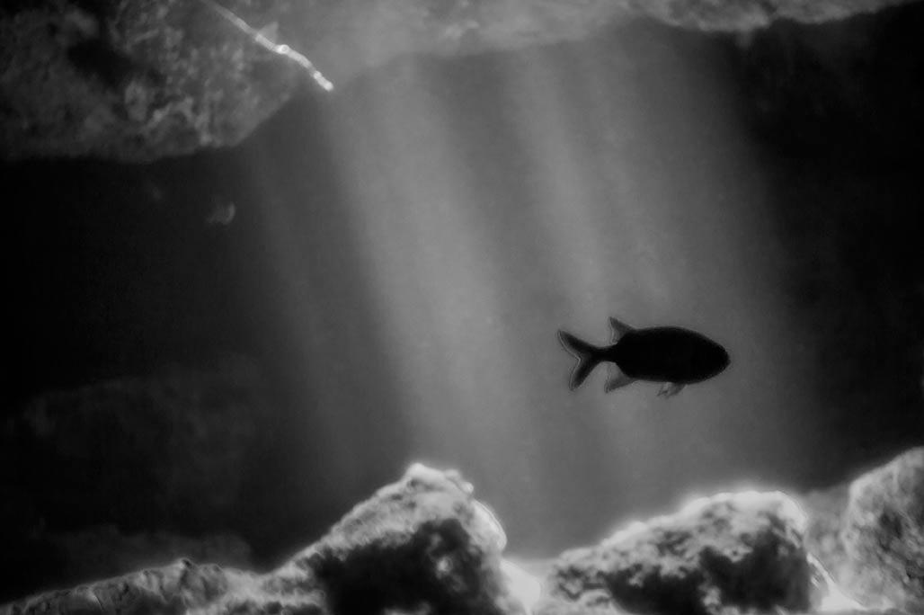 solo fish