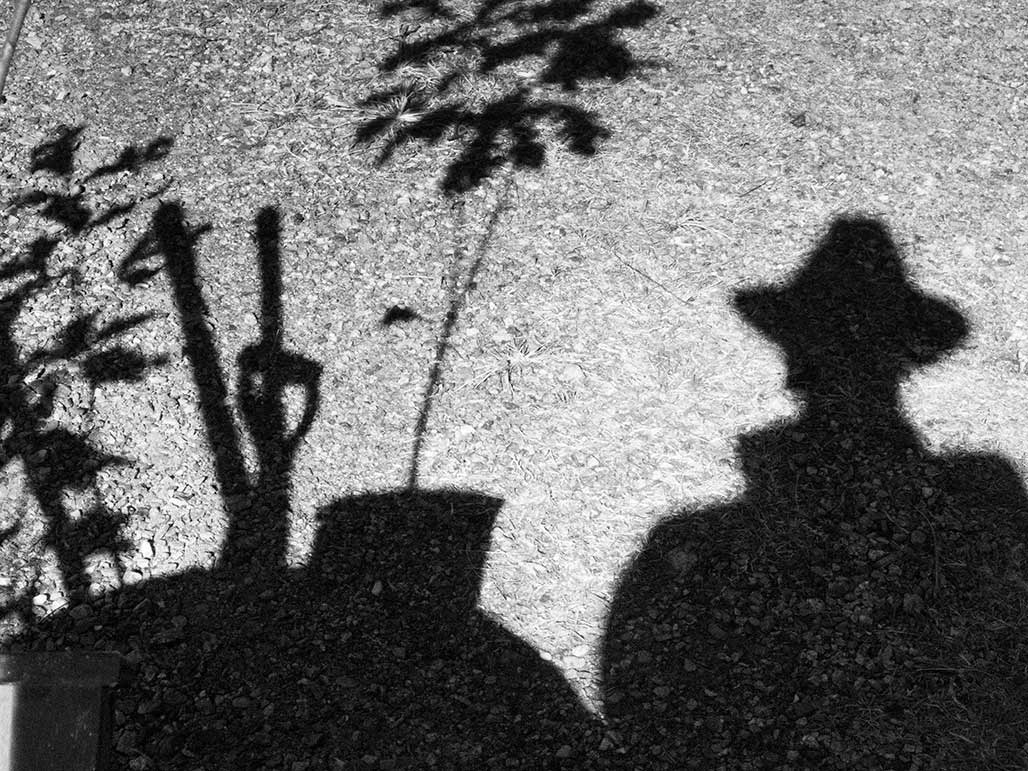 shadow planting trees