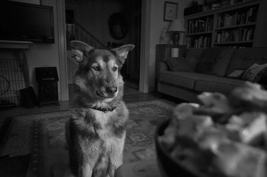 J-dog views the unattainable