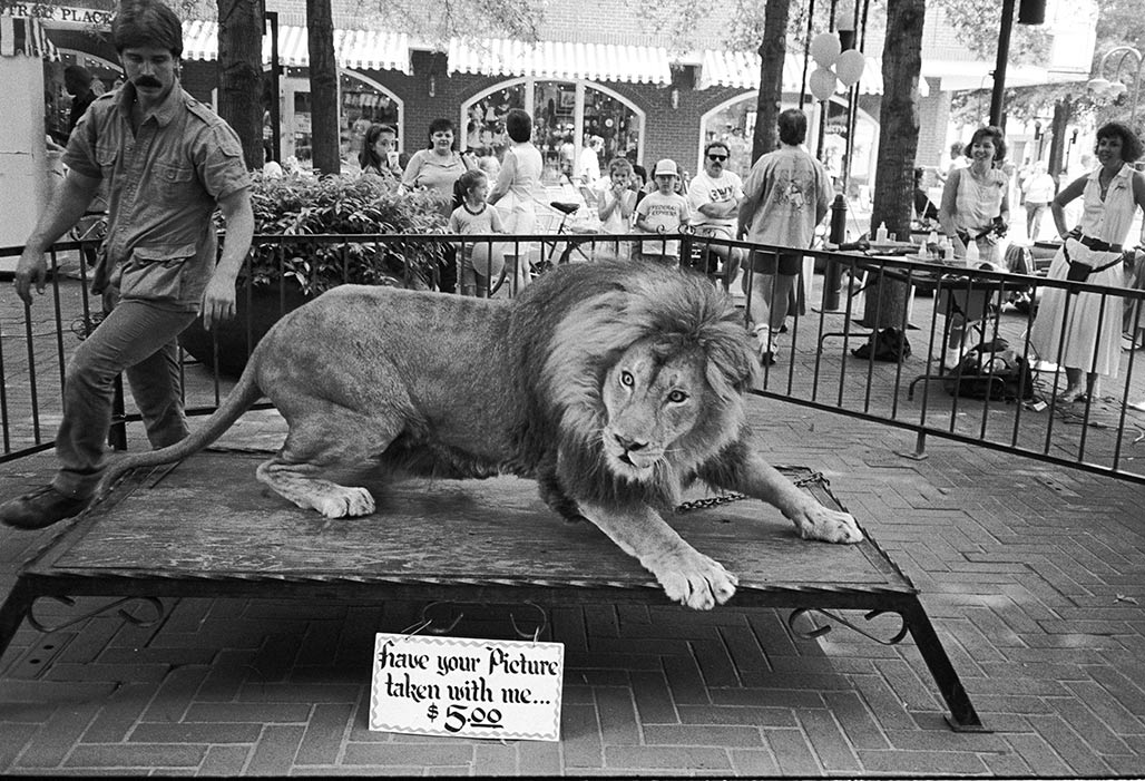 chained lion, pedestrian mall