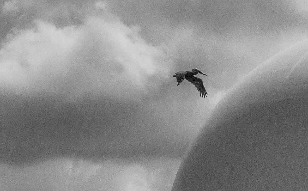 pelican Wilmington NC