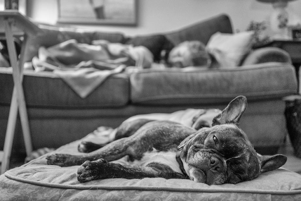 Toulouse and Liz nap