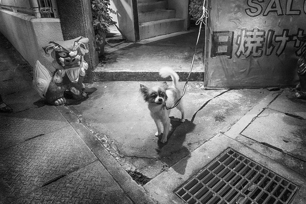 Xmas eve, streets of Chatan, shisa dog + little dog