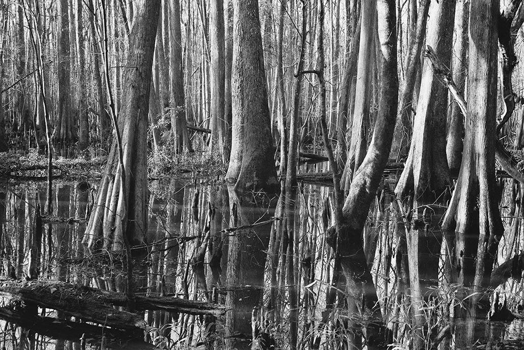 hardwood wetland