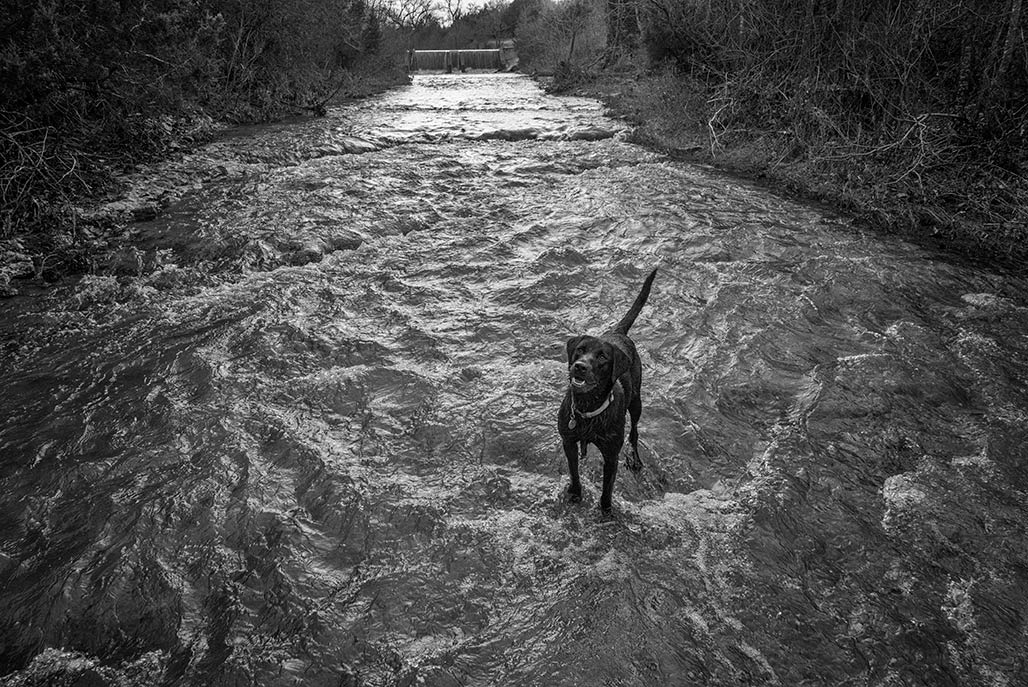 dog in stream...