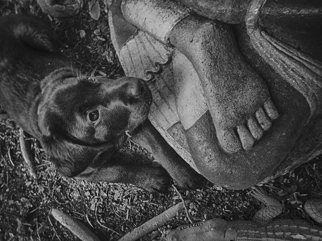 dog Buddha feet