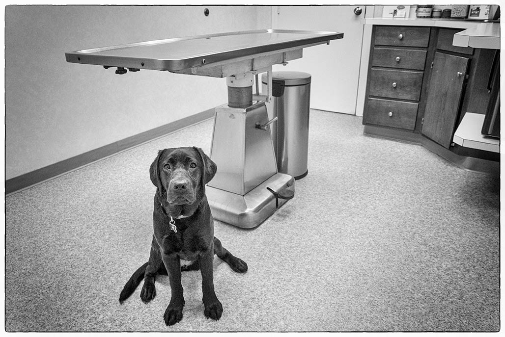 Tilly, exam room