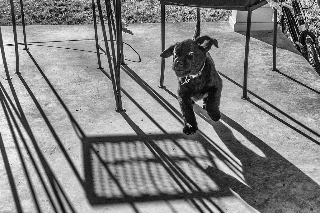 puppy cavorts
