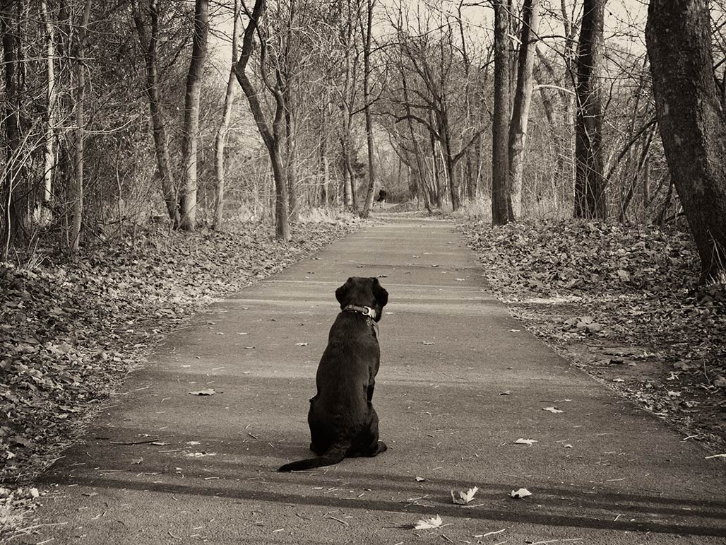 contemplation of the walk