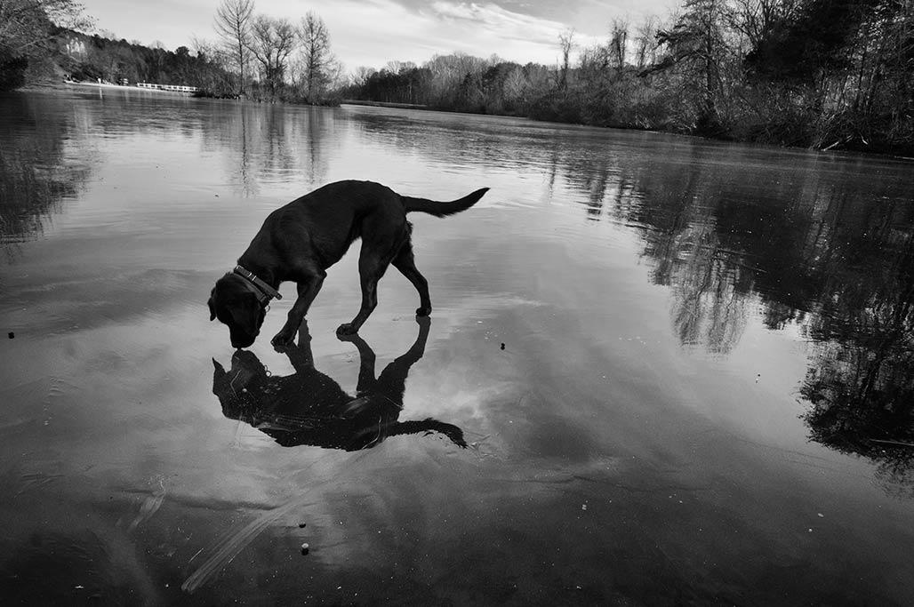 Tilly on ice