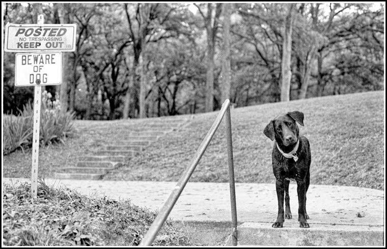 Markham's dog Francie, Waco, Texas