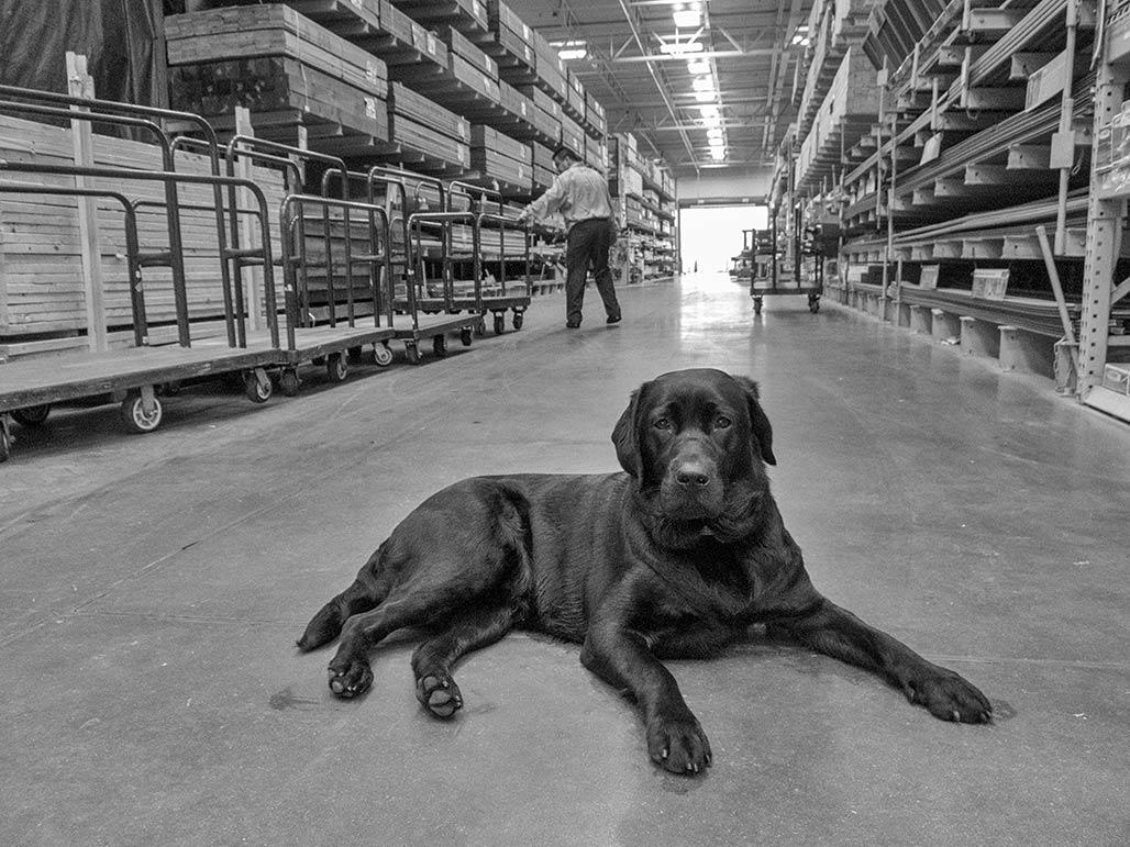 dog Lowe's store Tappahannock