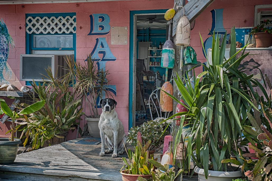 dog, bait shop