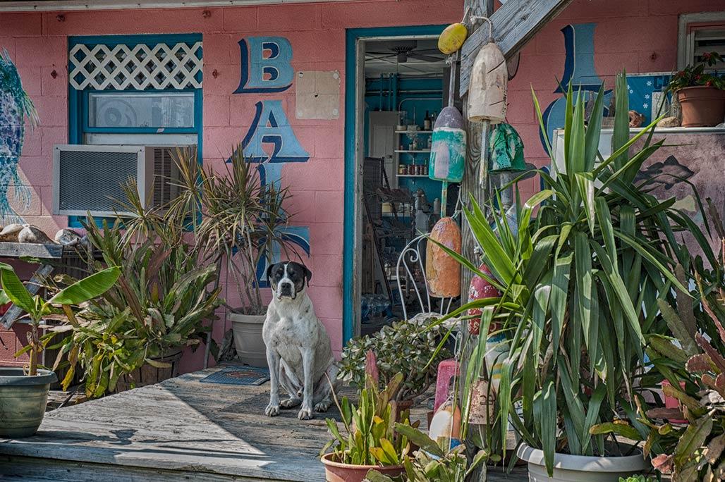 dog, bait shop