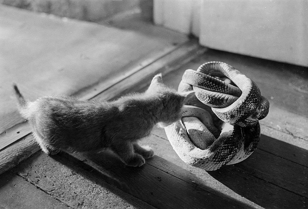 kitten snakes