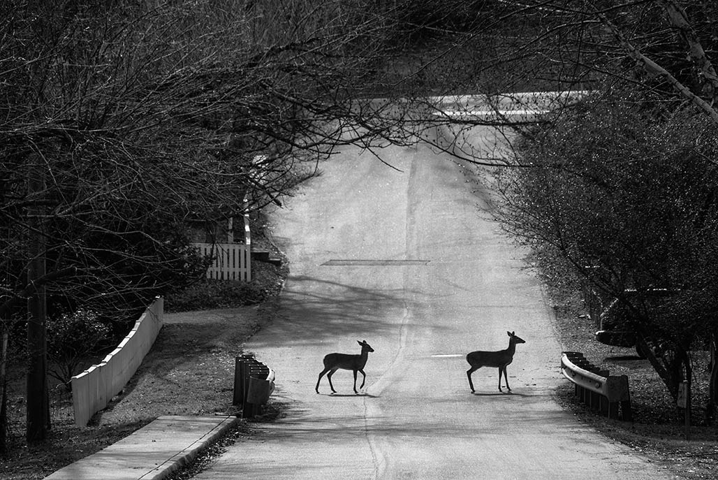 deer cross road