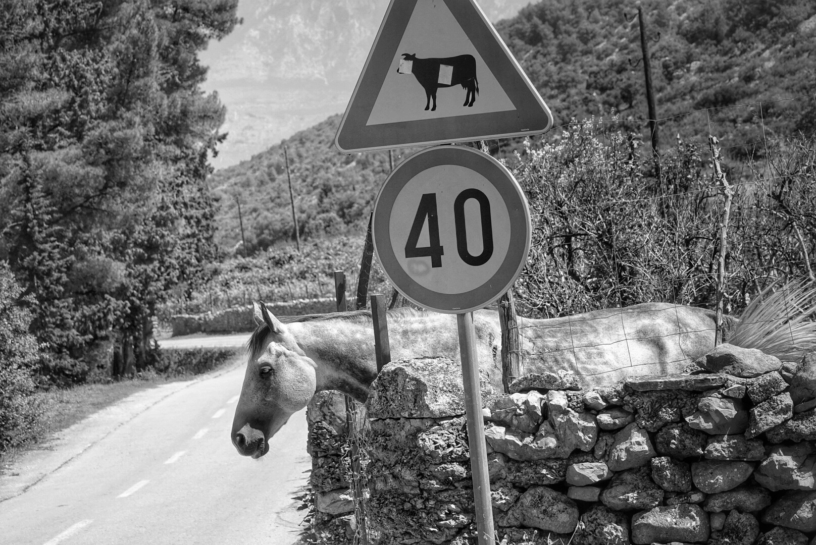 Life imitates traffic advisory