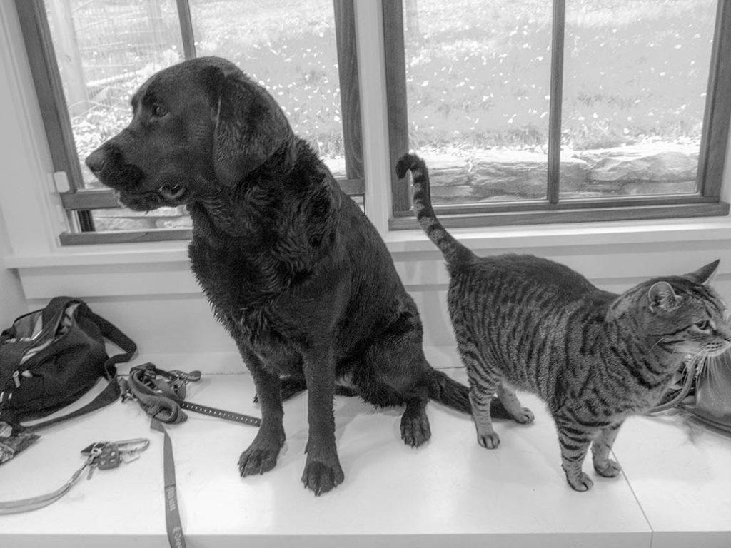 cat (D), dog (R)