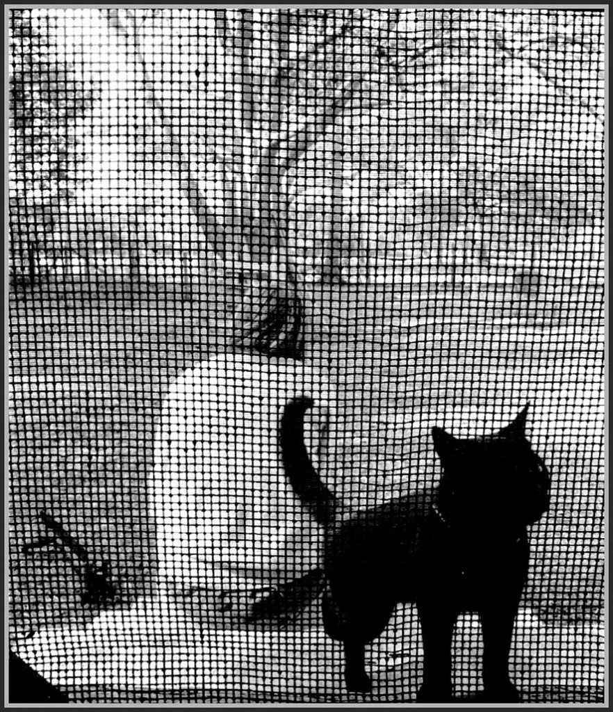 seated human cat screen door
