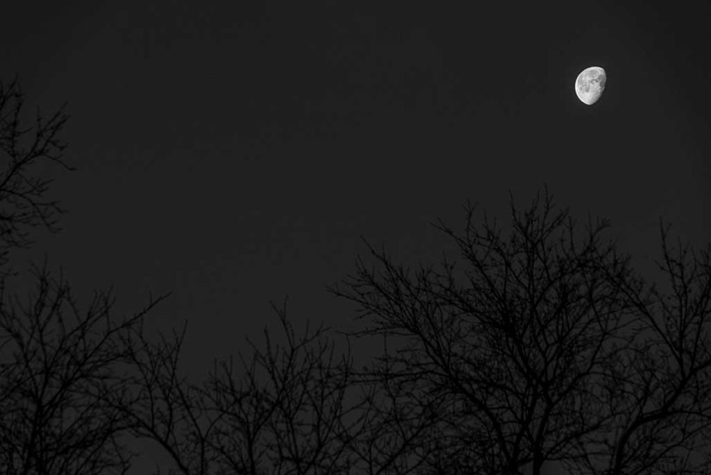 waning moon bare trees