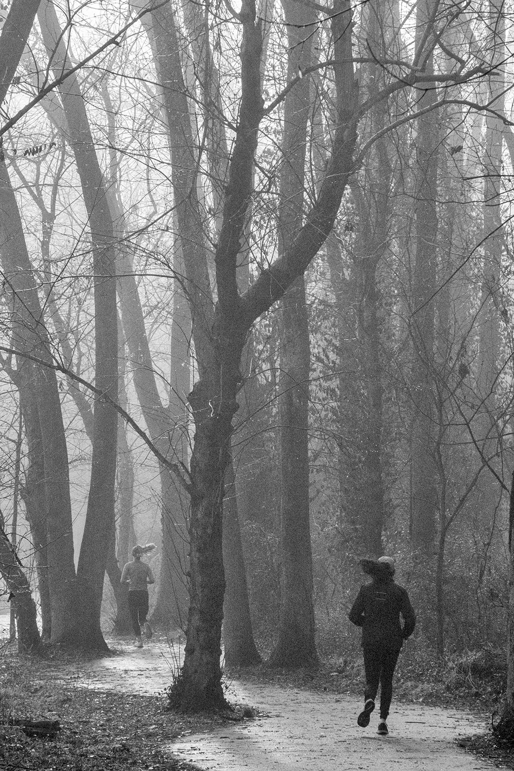 runners rivanna trail foggy morning