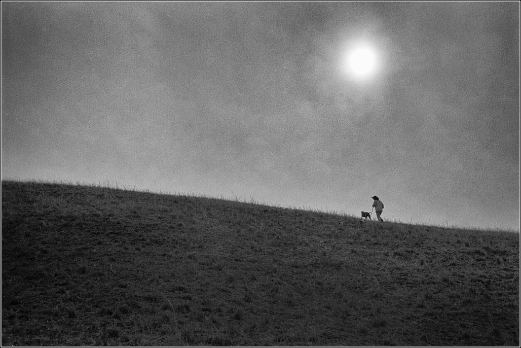 bipedal and quadruped climb a hill