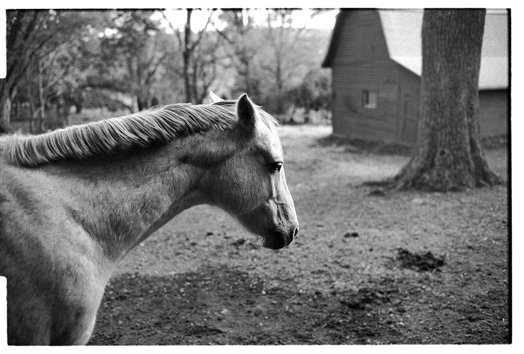 three horse barn tree