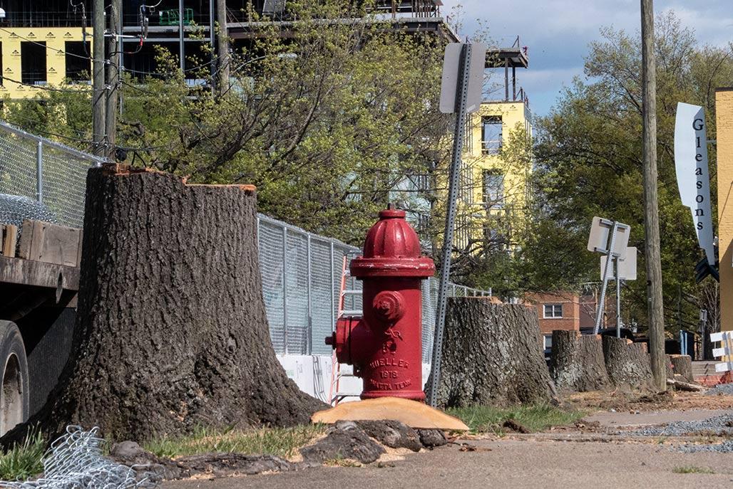 Garret Street stumps