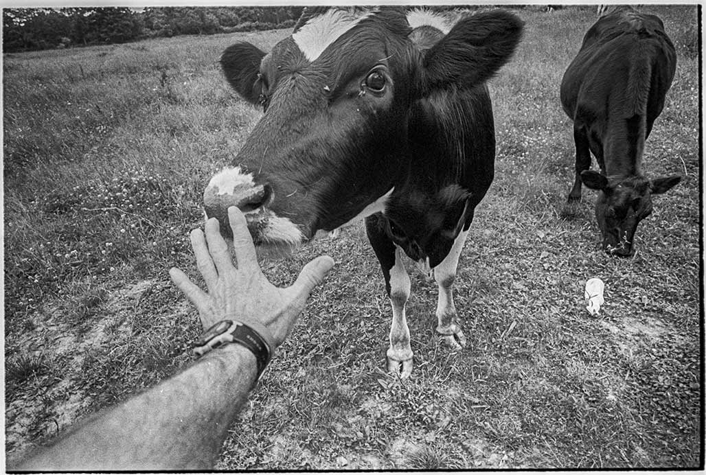 human hand cow nose