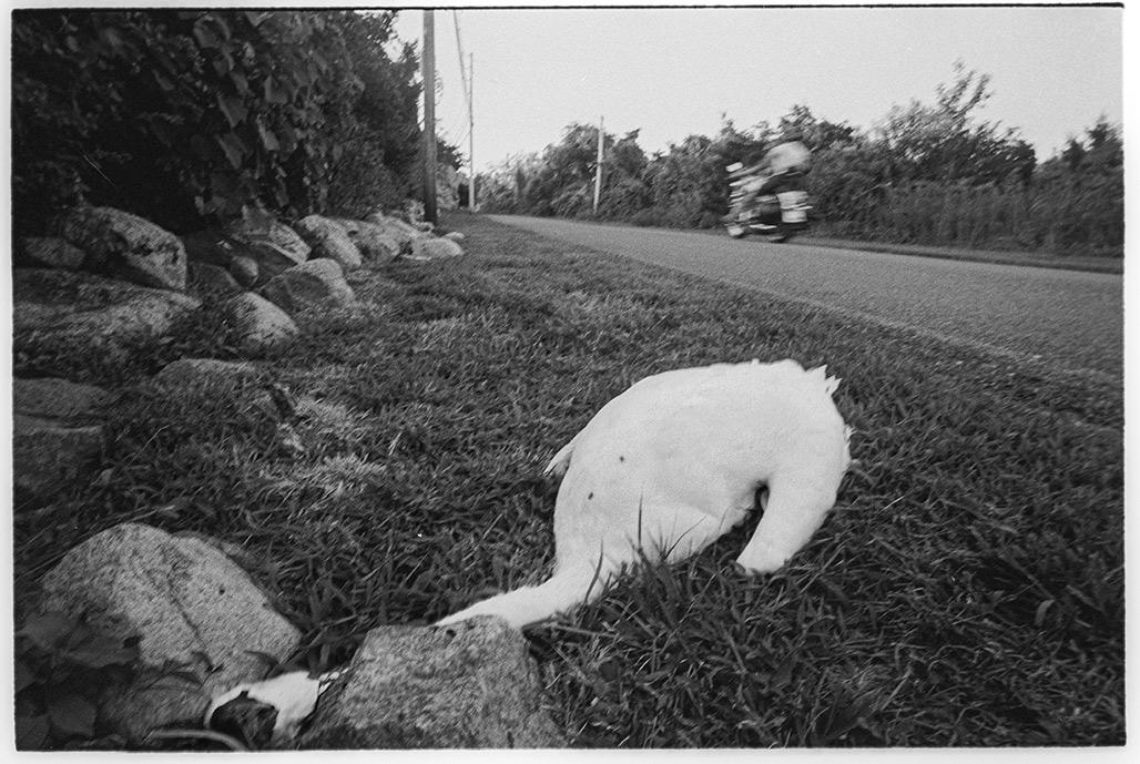 swan v car