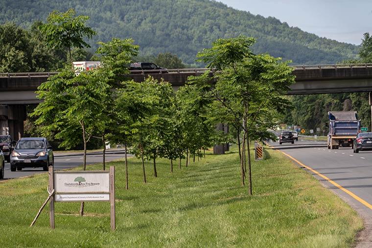 Route 20 Monticello Gateway