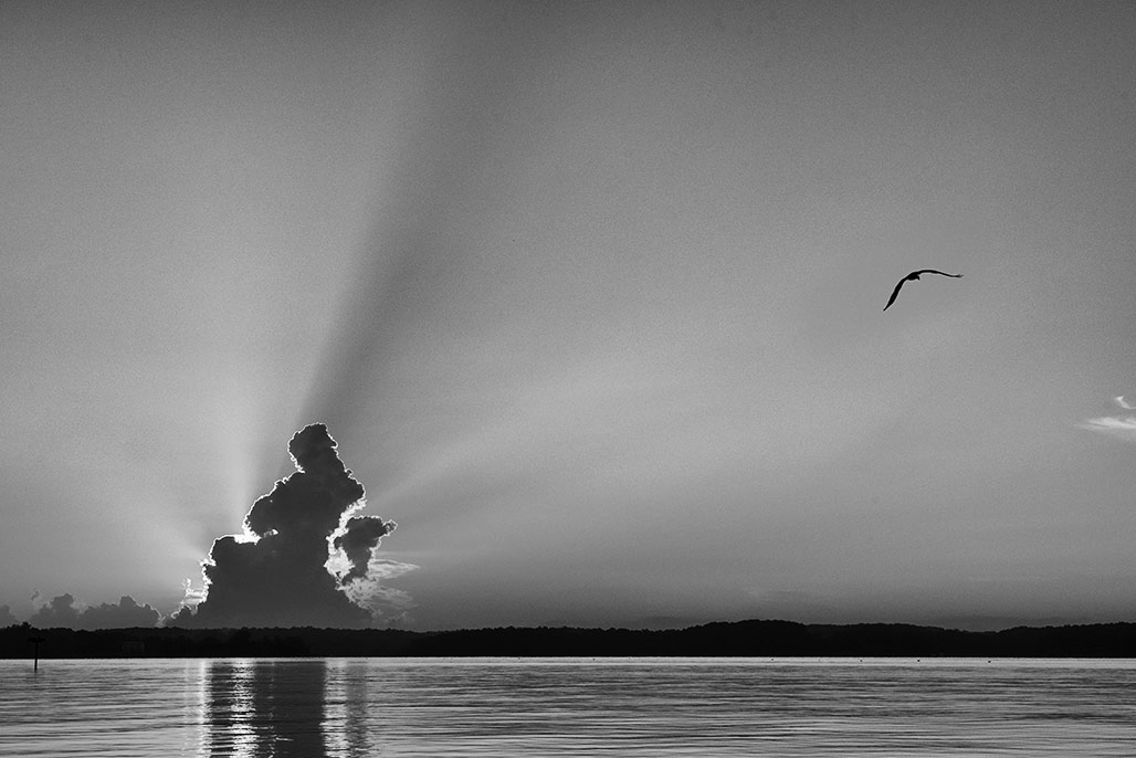 water cloud horizon osprey sun