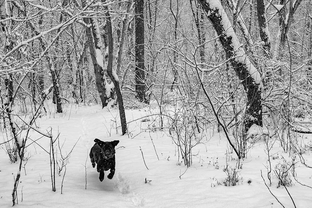 dog running in snow woods