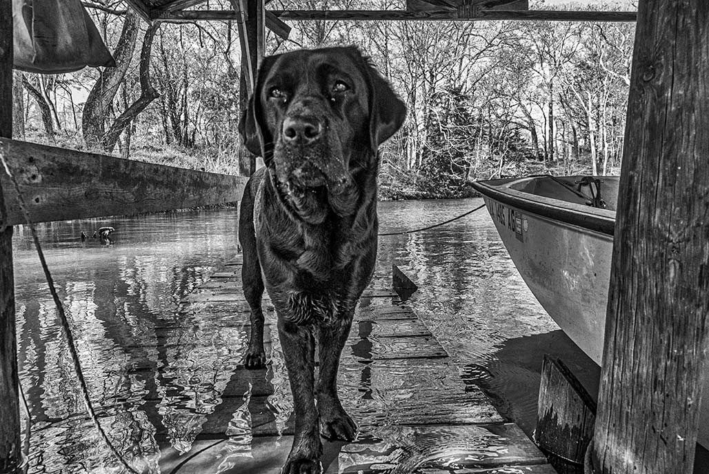 dog on a wet dock