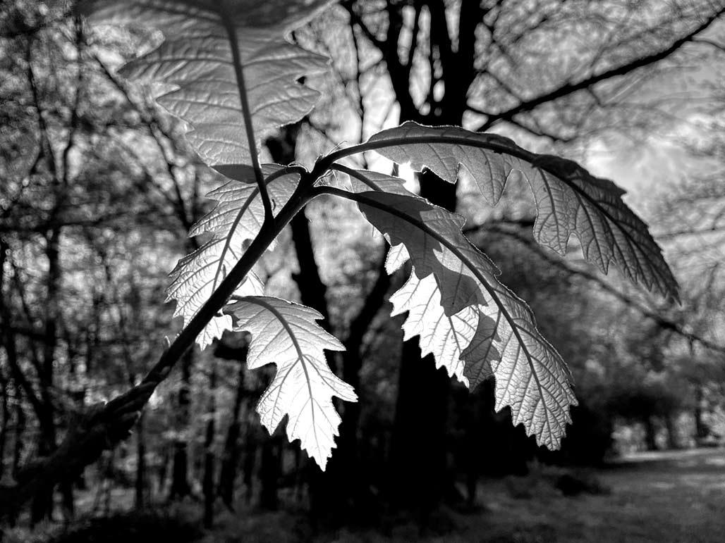 new leaves in April