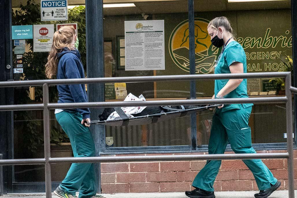 dog on stretcher