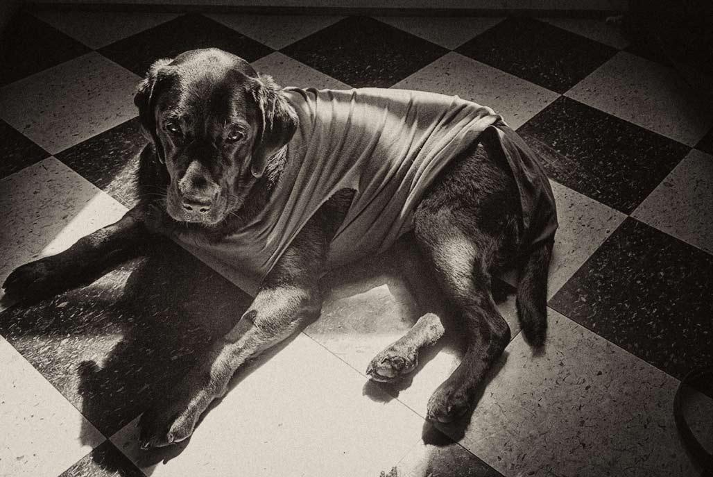 b&w linoleum dog